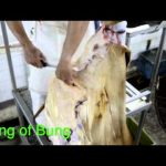 Dumaguete City Slaughter House